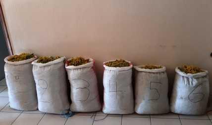 Σύλληψη τριών αλλοδαπών, σε περιοχή του ορεινού όγκου της Καστοριάς, για παράνομη συλλογή ποσότητας αρωματικού-θεραπευτικού φυτού