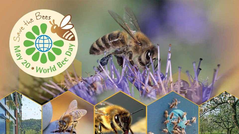 Παγκόσμια ημέρα της μέλισσας. Εκδήλωση από το Μελισσοκομικό Σύλλογο Κοζάνης την Τετάρτη 20 Μαΐου