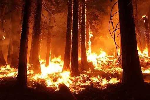 Ανακοίνωση προληπτικών μέτρων από το Δήμο Κοζάνης για την αποφυγή δασικών πυρκαγιών