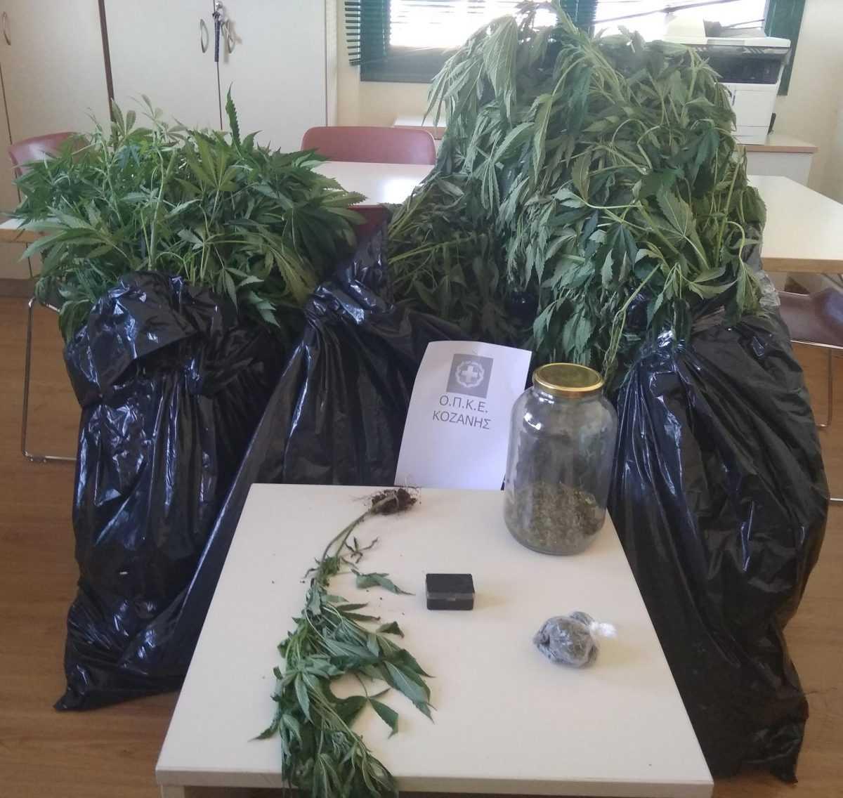 Καλλιεργούσαν σε περιοχή της Κοζάνης 27 δενδρύλλια κάνναβης. Συνελήφθησαν 55χρονος και 72χρονος σε περιοχή της Κοζάνης για καλλιέργεια και κατοχή ναρκωτικών ουσιών