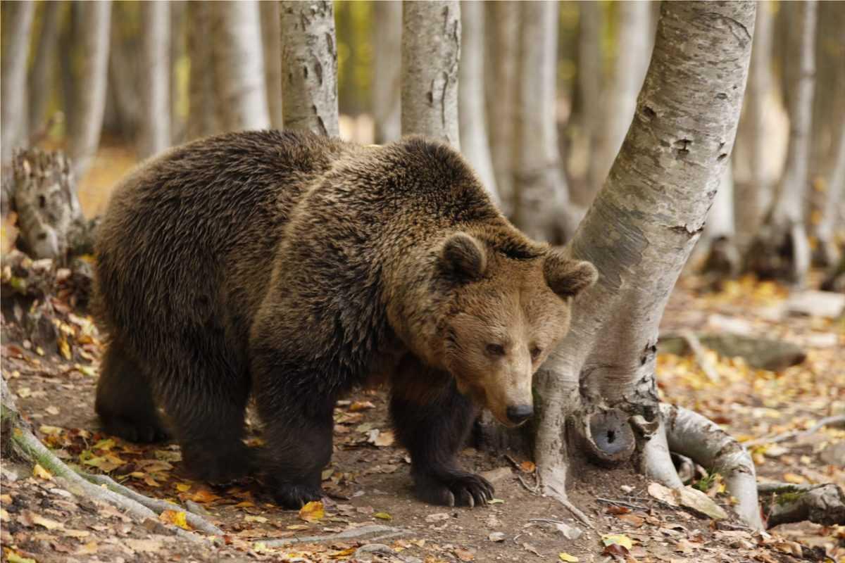 Άνθρωπος και αρκούδα, στρατηγική για μια αρμονική συνύπαρξη, το θέμα της συνάντησης με πρωτοβουλία του κ. Κασαπίδη
