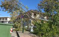 Πτώση δένδρου από σφοδρούς αγέρηδες στο κέντρο της Αιανής.