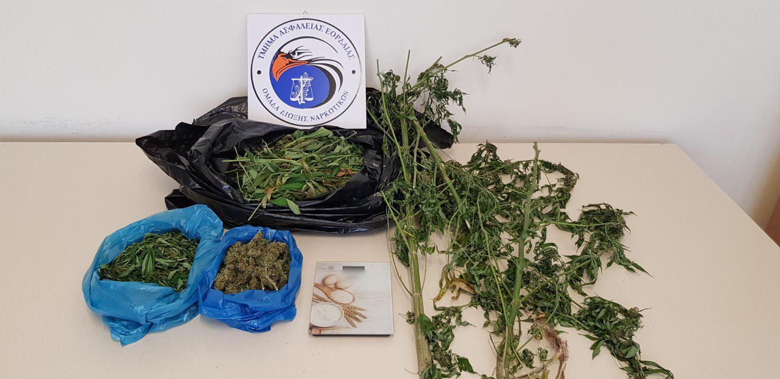 Απανωτές συλλήψεις καλλιεργητών και διακινητών κάνναβης στην περιοχή μας. Συνελήφθη 55χρονος για καλλιέργεια δενδρυλλίων κάνναβης και κατοχή ναρκωτικών