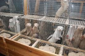 Εντατικοποίηση ελέγχων εκτροφών γουνοφόρων ζώων στη Δυτική Μακεδονία.