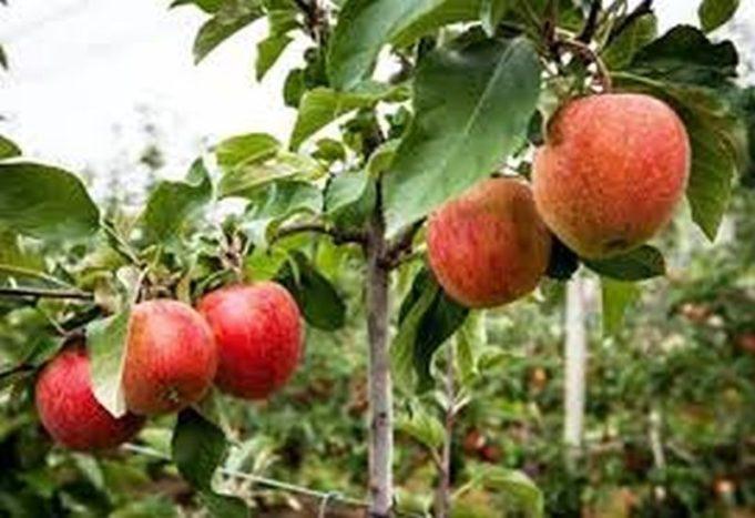 Εορδαία: To καλάθι του χειμώνα με άγρια φρούτα γεμίζουν οι «Σπορίτες της Δυτικής Μακεδονίας»
