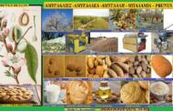 Φυτά από τους αγρούς και της παλιές αυλές της Κοζάνης. ΜΠΑΛΑΜΙΑ & ΜΠΑΛΑΜΙΕΣ Β  ΑΜΥΓΔΑΛΙΕΣ ΓΛΥΚΙΕΣ. Γράφει η Μάρθα Στ. Καπλάνογλου Τεχνολόγος Γεωπόνος