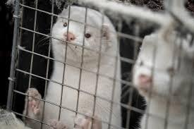 Η Περιφέρεια Δυτικής Μακεδονίας ενημερώνει για τη διαδικασία απομάκρυνσης των μικρών άγριων ζώων από τον αστικό ιστό.