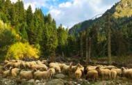 Η κτηνοτροφία στη Δυτική Μακεδονία από τα μέσα του 18ου έως τα μέσα του 19ου αιώνα. Παπαϊωάννου Θεοδώρα