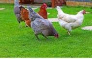 Κρούσμα γρίπης των πτηνών σε άγριο πτηνό στην περιοχή της Καστοριάς
