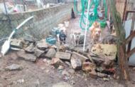 Βάρβαρες συμπεριφορές Δήμου Σιάτιστας και πολιτών κατά αδέσποτων ζώων στη Σιάτιστα. Κόλαση και το παράνομο δημοτικό κυνοκομείο Σιάτιστας με νεκρά, διαμελισμένα, σάπια, πεταμένα σε σκουπιδότοπους αδέσποτα ζώα. Επιστολή στον πρωθυπουργό και άλλους αρμόδιους φορείς της ΠανελλαδικήςΦιλοζωικής Περιβαλλοντικής Ομοσπονδίας.