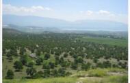 «Δασική η έκταση», αλλά όχι «δάσος» της Μεσιανής.  Συζήτηση στο χωριό παρουσία του βουλευτή Γιώργου Αμανατίδη για περαιτέρω σαφείς διατυπώσεις και χαρακτηρισμούς