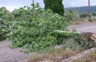 Κλειστή η επαρχιακή οδός Φλώρινας -Καστοριάς, μέσω Βιτσίου, λόγω της ισχυρής χιονόπτωσης των τελευταίων ημερών και της πτώσης στο οδόστρωμα δέντρων και κλαδιών. Πυρετωδώς εργάζονται οι άνδρες της πυροσβεστικής για τον καθαρισμό. Κατεπείγουσα συνεδρίαση του ΠΣ Δυτ. Μακεδονίας σήμερα.